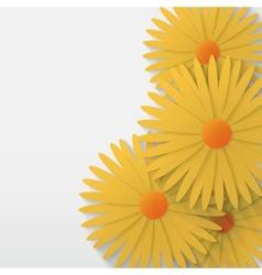 flower chamomile background vector image