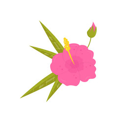 beautiful tropical flower blooming hibiscus with vector image