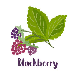 Raspberry forest berry vector