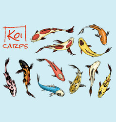 set of koi carps japanese fish colored korean vector image