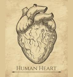 human heart retro sketch vector image vector image