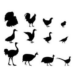 Poultry silhouettes vector image