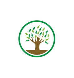 tree logo icon design template vector image