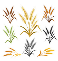 wheat ears emblem set vector image