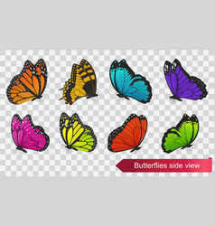 butterflies side view isolated on transparent back vector image