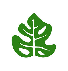 Simple monstera green leaf vector