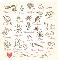 Set drawings spices for design menus recipes vector