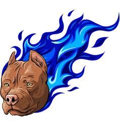 Head dog pitbull on fire vector