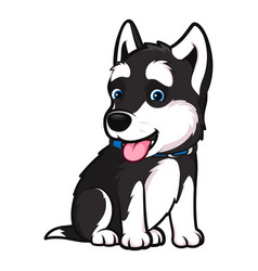 husky breed dog in a sitting pose vector image