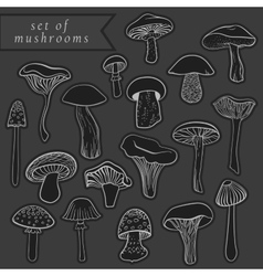 Vintage set of different hand drawn mushrooms on vector image