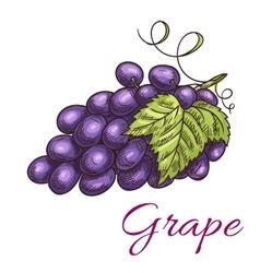 Black grape berries icon vector image vector image