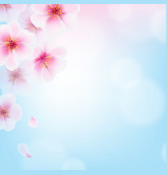 Cherry flowers vector