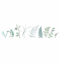 eucalyptus seeded fern asparagus designer art vector image