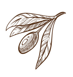 Greek product olive branch plant isolated sketch vector
