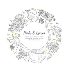 herbs and spices banner template round frame vector image