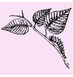 caterpillar crawling vector image vector image
