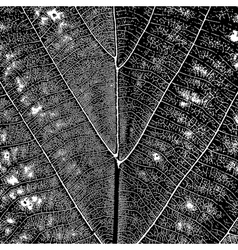 Leaf Texture vector image vector image