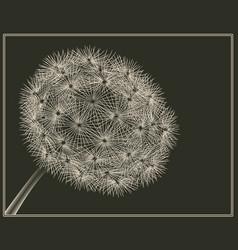 blowball woodcut vector image