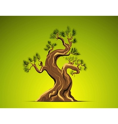 Bonsai Tree Background vector image