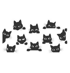 Cat spy animal cartoon vector