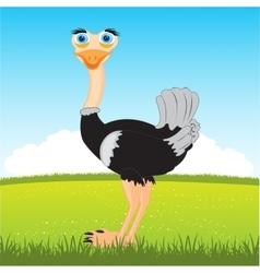 Ostrich on glade vector