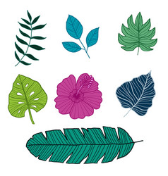 Set botanical vector