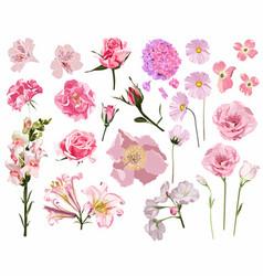 set summer wild pink floral vector image