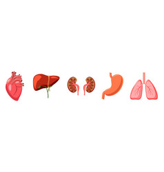 human organs icon set cartoon style vector image