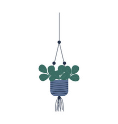 Plant growing in hanging pot botanical decoration vector