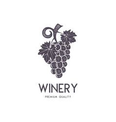 wine winery logo template drink alcoholic vector image