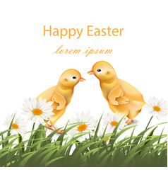 happy easter chickens card chamomile field vector image