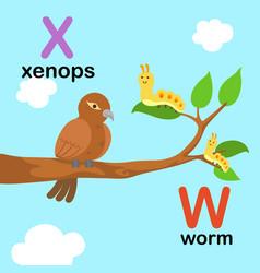 alphabet letter w-worm x-xenops vector image vector image