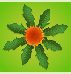 Dandelion with green leaves vector