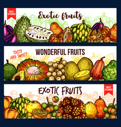 fruits from exotic countries sketch vector image