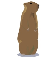 Groundhog vector
