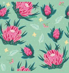 pink king protea australian native flower seamless vector image