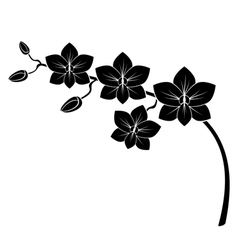 orchid branch vector image vector image