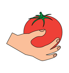 tomato hand holding vegetable icon image vector image