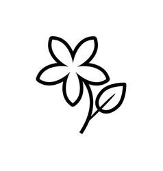 jasmine flower icon vector image vector image