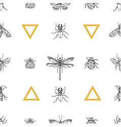 pattern insects vector image vector image