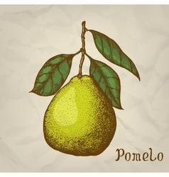 Pomelo hand drawn Pomelo vector image