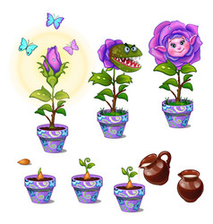 stages of growth magical flower with human face vector image vector image