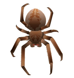Brown scary big shaggy spider isolated on white vector