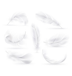 realistic white feathers falling fluffy twirled vector image