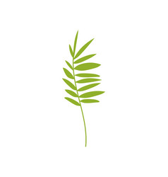 tropical feathery palm leaf botanical design vector image