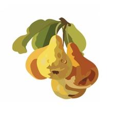 Watercolor pears fruits vector