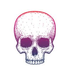 human skull over white hand drawn vector image