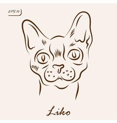 Liko cat vector image vector image