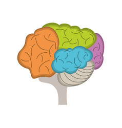 brain human idea creativity vector image