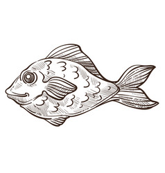 Fish isolated sketch bass or underwater animal vector